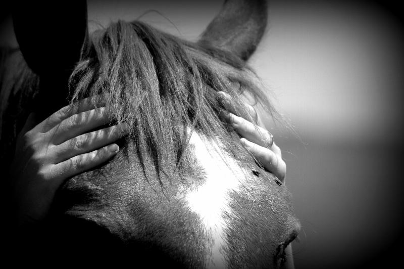 c'est le printemps !! immortaliser votre cheval pour de beaux souvenirs ! contactez moi :)  Dsc_2811