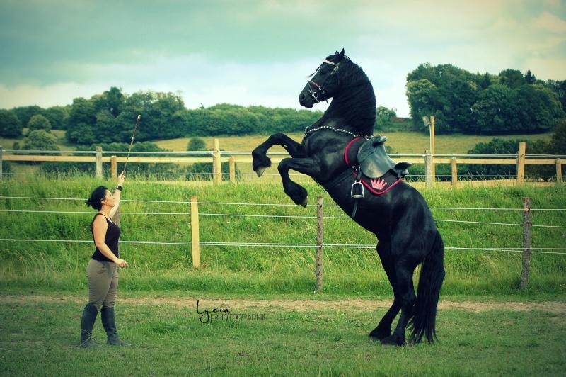c'est le printemps !! immortaliser votre cheval pour de beaux souvenirs ! contactez moi :)  Dsc_3212