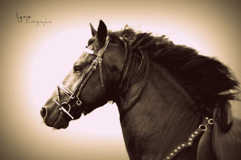 c'est le printemps !! immortaliser votre cheval pour de beaux souvenirs ! contactez moi :)  Dsc_3312
