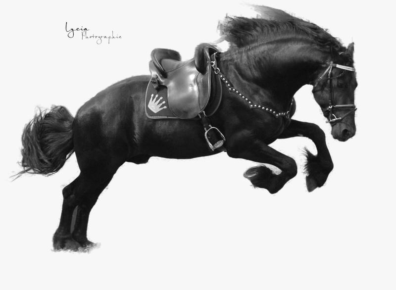 c'est le printemps !! immortaliser votre cheval pour de beaux souvenirs ! contactez moi :)  Dsc_3313