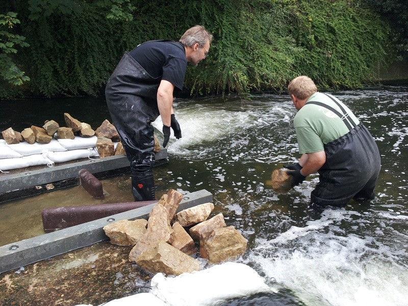 Improving fish passage on the Hogsmill, 17-20th July, Volunteers needed  - Page 2 Hog210