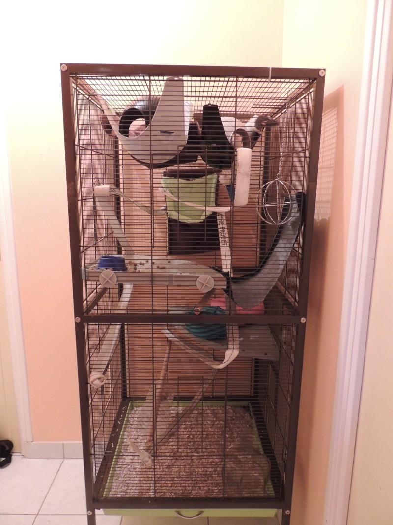 Ma Cage maison Dscn1511