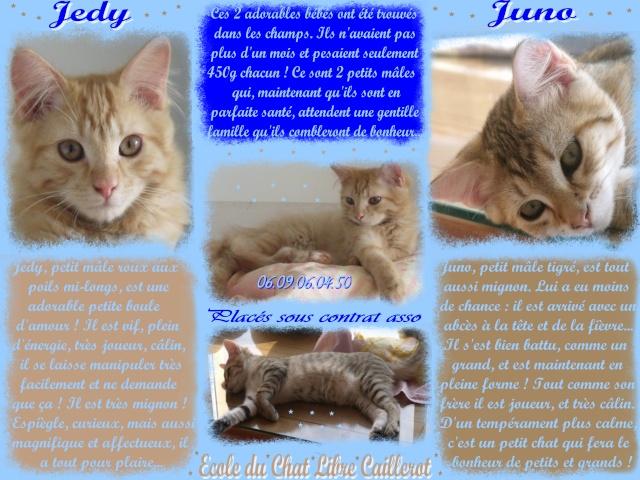 JUNO - tigré clair - (Jedy est adopté) - 05/2014  Jedy__11