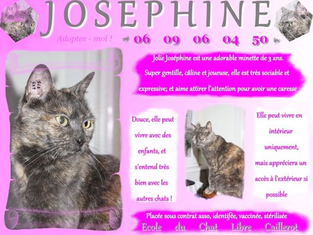 JOSEPHINE - Ecaille de Tortue - 07/11 Josyph10