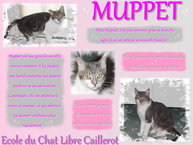 MUPPET - Grise & Blanche - 07/13 Muppet12