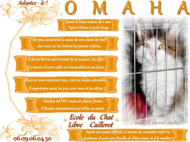 OMAHA - Tigré & Blanc Poils Longs- né 07/12 Omaha10