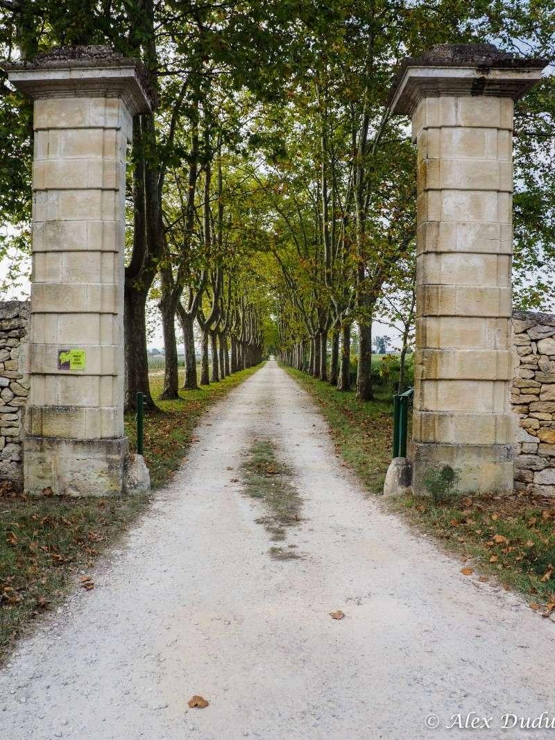 Bordeaux et sa région P9240215