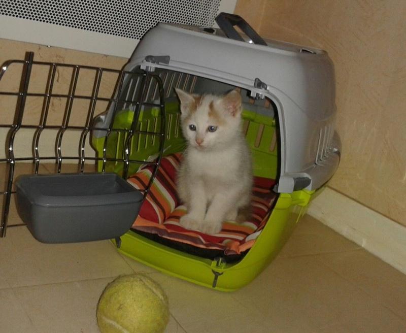 Un petit chaton 15077210