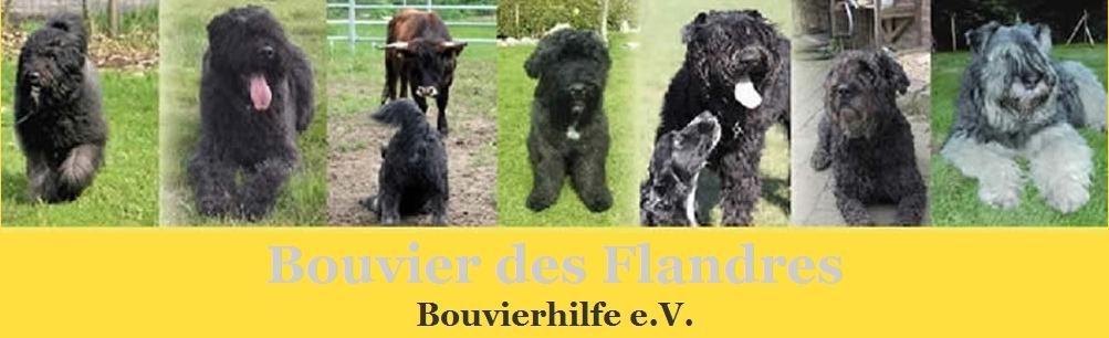 BouvierForum für Interessierte der Rasse Bouvier des Flandres