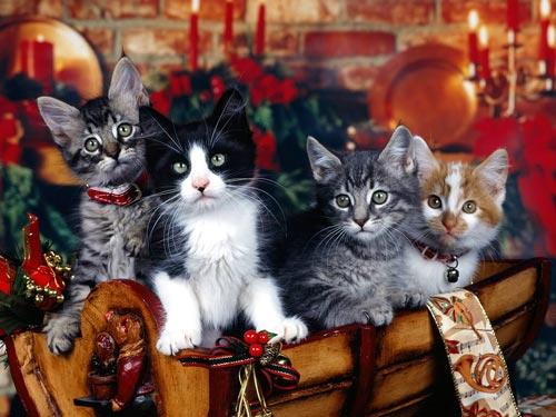 Merry Christmas  62838510