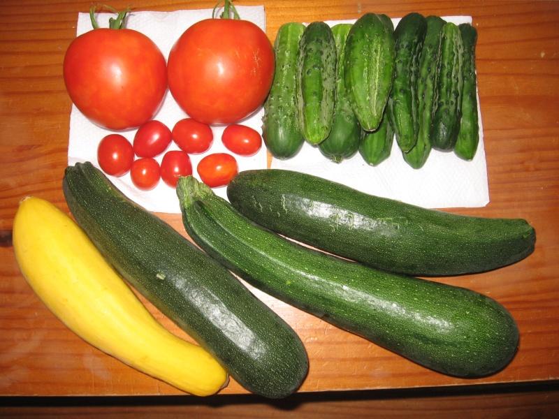 Snack cucumber/ dwarf cucumber Img_5610