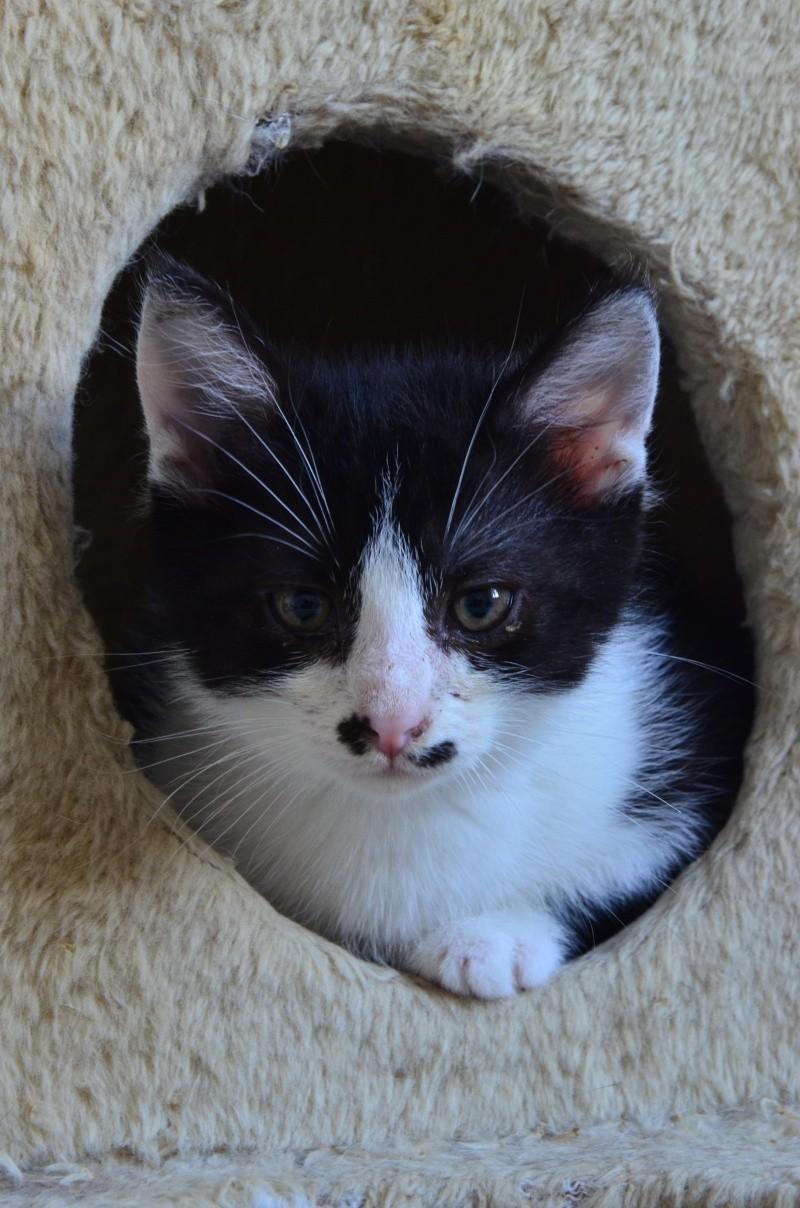 Mikado, noir et blanc, né en Mars 2014  Dsc_1916