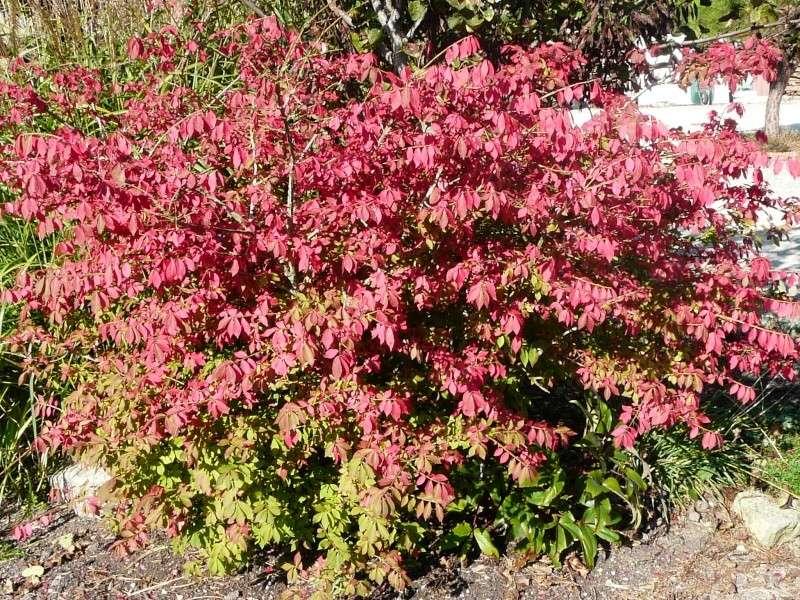 l'automne arrive... P1070612