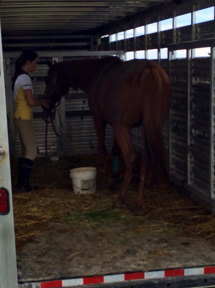 Mon cheval ne veut absolument pas entré dans le van..  10559310