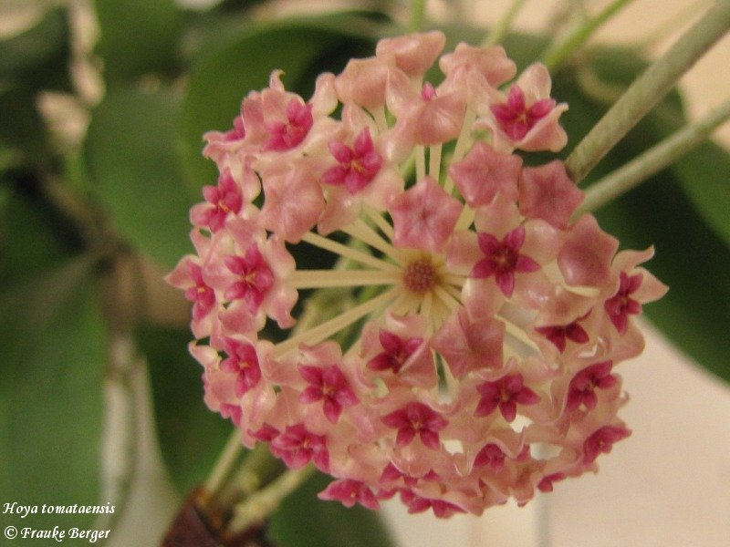 Blüten 2014 - Seite 26 12_hoy10