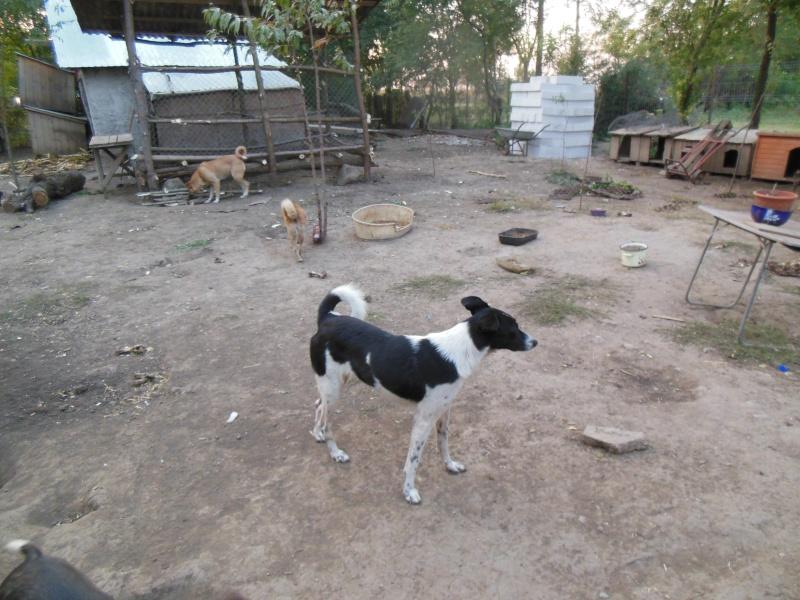 GAYA- femelle noir et blanc née en 2013- parrainée par Skara - SC-SOS-R- 02214