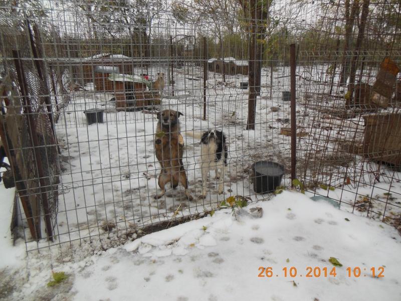 JUMPY femelle née en 2010- sauvé de l'équarrissage le 10/04/2014- parrainée par Edni94 -R-SC-SOS 05612