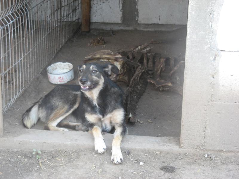 EVORA, croisée berger, née en 2009 - Trouvée dans la cour d'une entreprise en 2012 - parrainée par Sky 30 - FB-SOS-SC-R- 11411