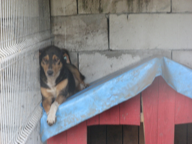 DOUCKY - NE LE 09/01/2012 - RECHERCHE NOUVELLE FAMILLE (visible sur dépt 44 ) sorti de l'équarrissage en déc 2013-SC-SOS- 15910