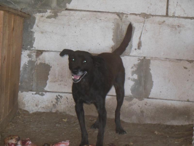 BLACHI, ratier, né en 2004 PARRAINE PAR LAIRO - FB - LBC- SOS -SC- AS - Page 4 Pict1025