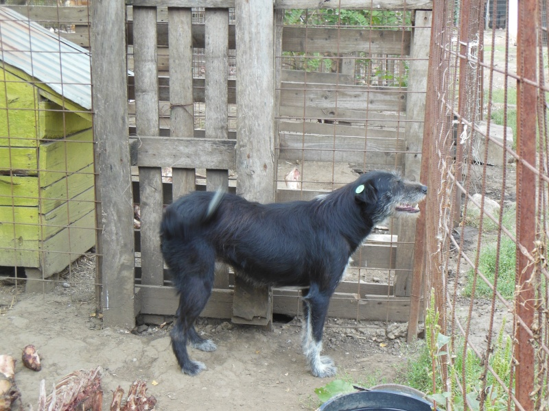 NOYA, née en 2010, En FA dans le 94 - type griffon - Parrainée par Yemtsi-R-SOS-FB-LBC-SC-AS-30MA - Page 2 Pict1332