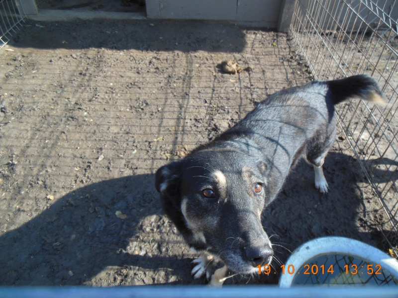 EVORA, croisée berger, née en 2009 - Trouvée dans la cour d'une entreprise en 2012 - parrainée par Sky 30 - FB-SOS-SC-R- Pict1411