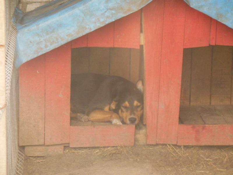 DOUCKY - NE LE 09/01/2012 - RECHERCHE NOUVELLE FAMILLE (visible sur dépt 44 ) sorti de l'équarrissage en déc 2013-SC-SOS- Pictu856