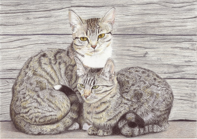 Deux jeunes chats 2jeune10