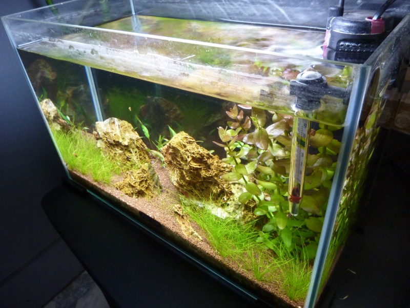 """20 litres """"type"""" aquascaping [FIN] - Page 5 P1170911"""