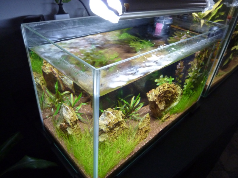 """20 litres """"type"""" aquascaping [FIN] - Page 5 P1170912"""