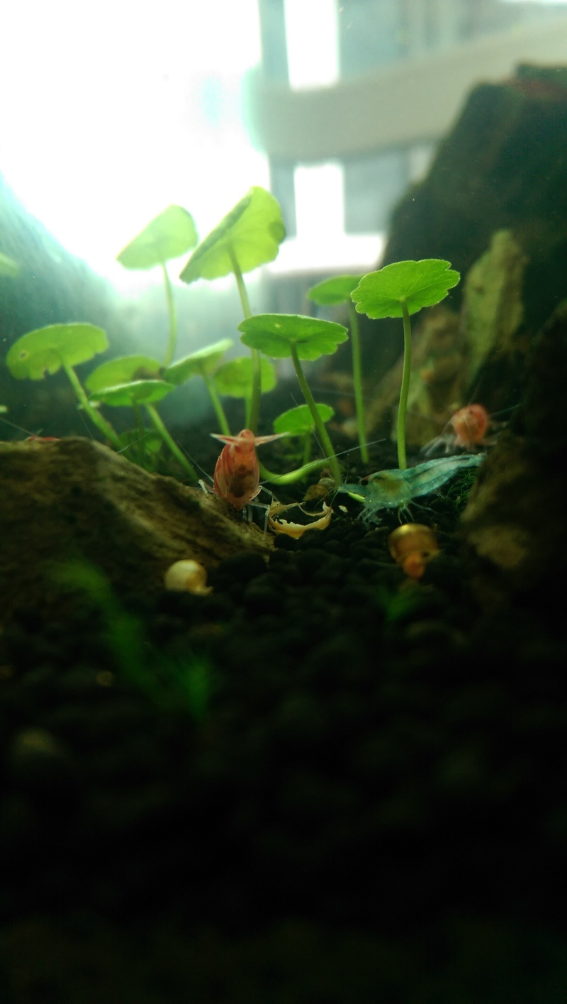 Mon bac à Taiwan Bee  Imag0012
