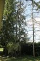 Arbres porteurs pour plateforme dans les arbres Img_1612