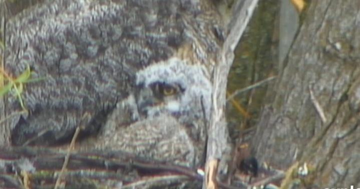Wildtier-Livecams - Seite 39 Eu10