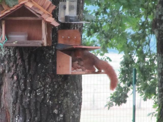 Maisons d'oiseaux !!! Img_0014