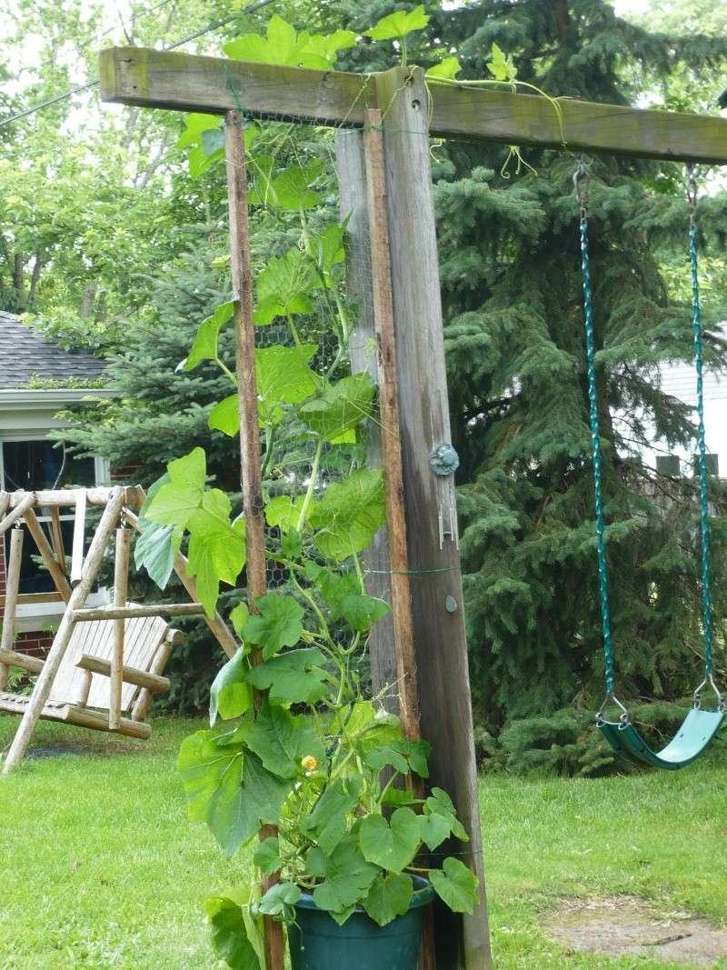 Pumpkin and Garden P1010911