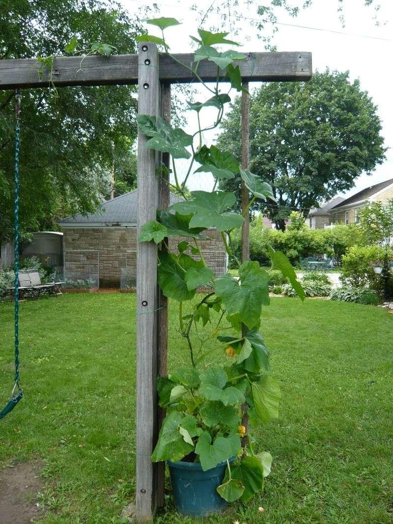 Pumpkin and Garden P1010912