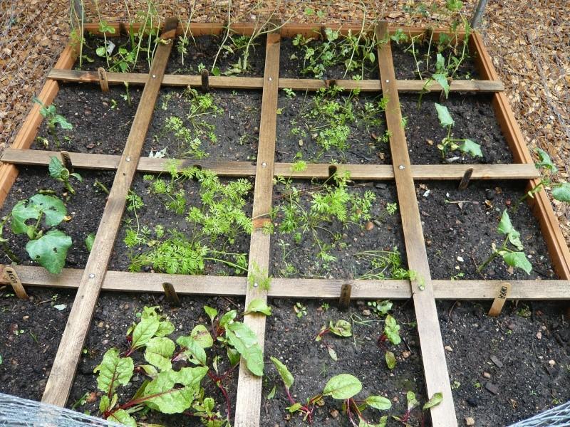 Pumpkin and Garden P1010913