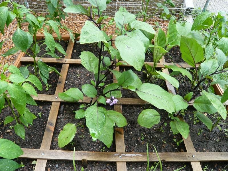 Pumpkin and Garden P1010914