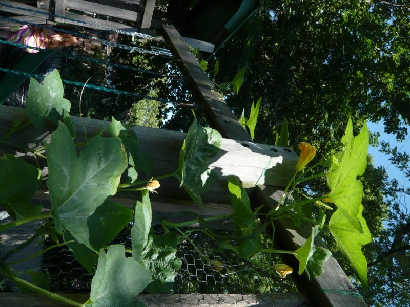 Pumpkin and Garden P1010916
