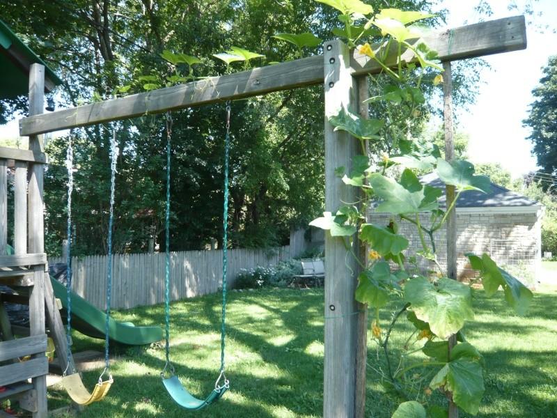 Pumpkin and Garden P1010918