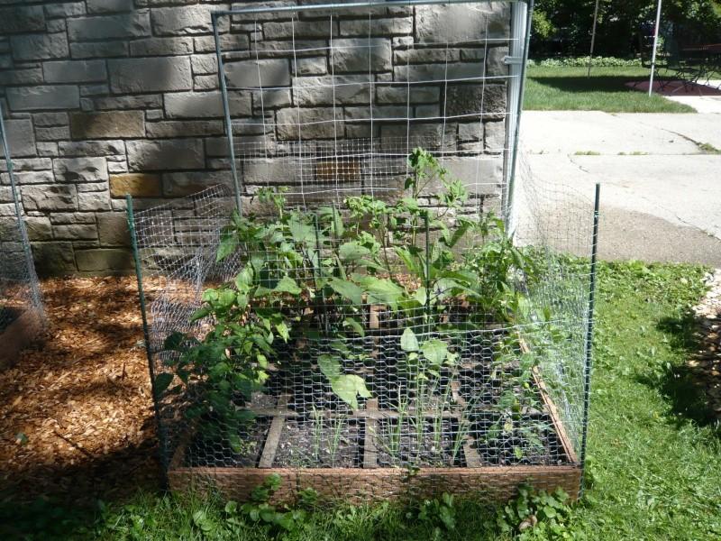 Pumpkin and Garden P1010920