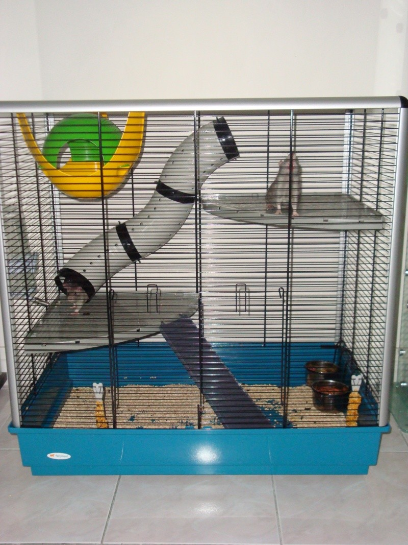 Vends cage Jenny KD (68-67-Ile de France) Dsc01910