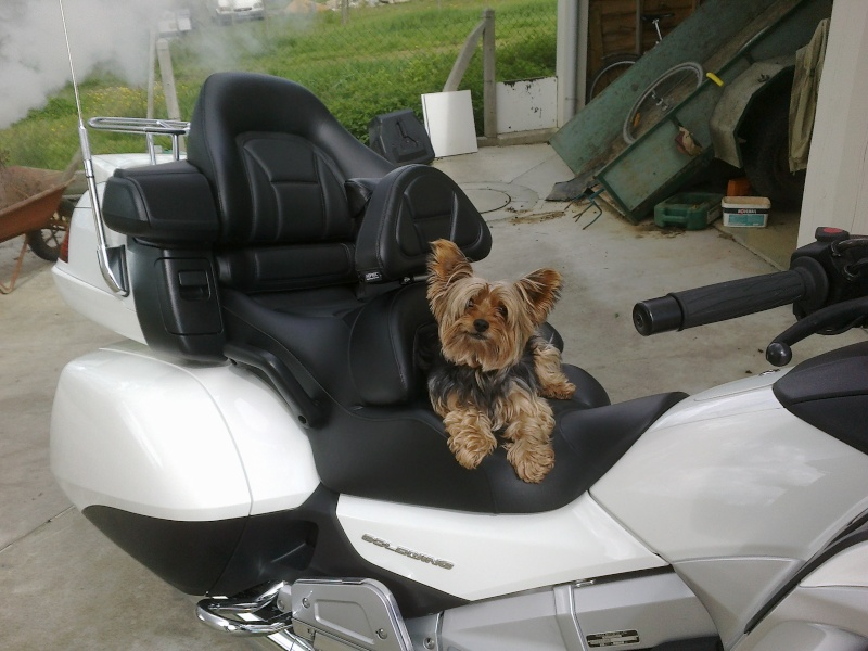 Transport Chien et Goldwing 14042010