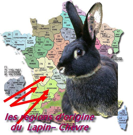 le lapin Chèvre Origin14