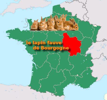 le lapin Fauve de Bourgogne Origin16