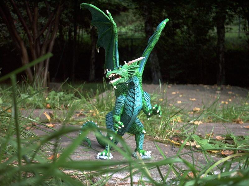 meine Drachen Rimg0010