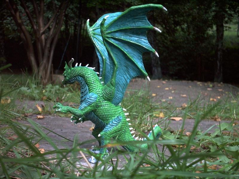 meine Drachen Rimg0018