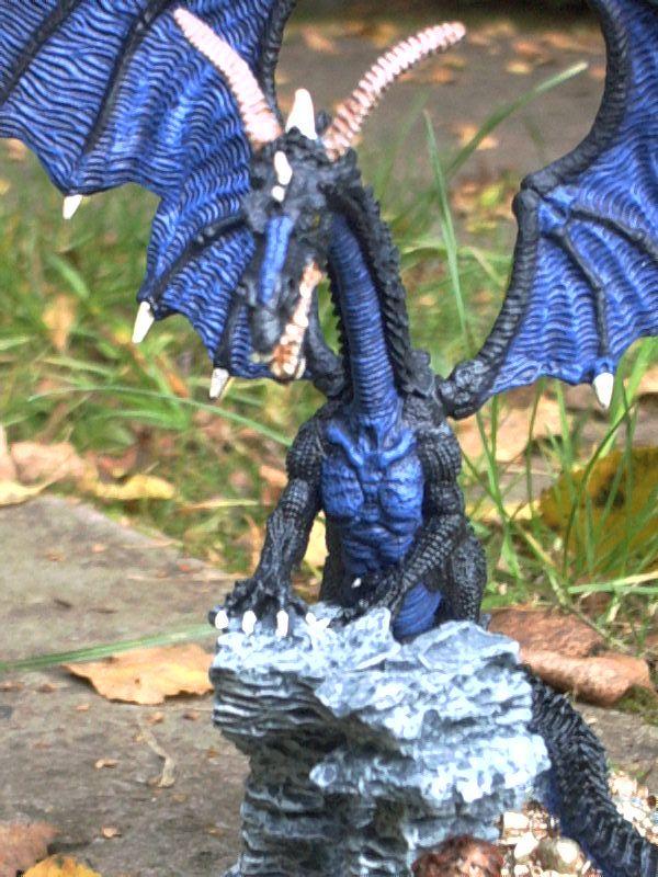meine Drachen Rimg0038