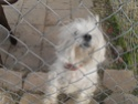 My Doggies at all 3 houses My_pic15
