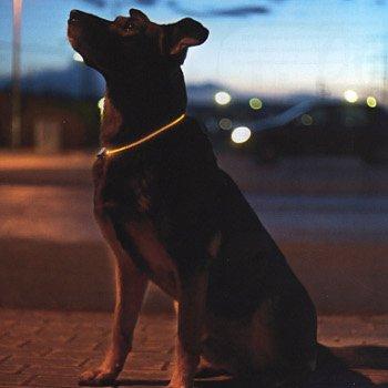 Accessoires de mode pour chiens, pour ou contre ?  - Page 6 78443610